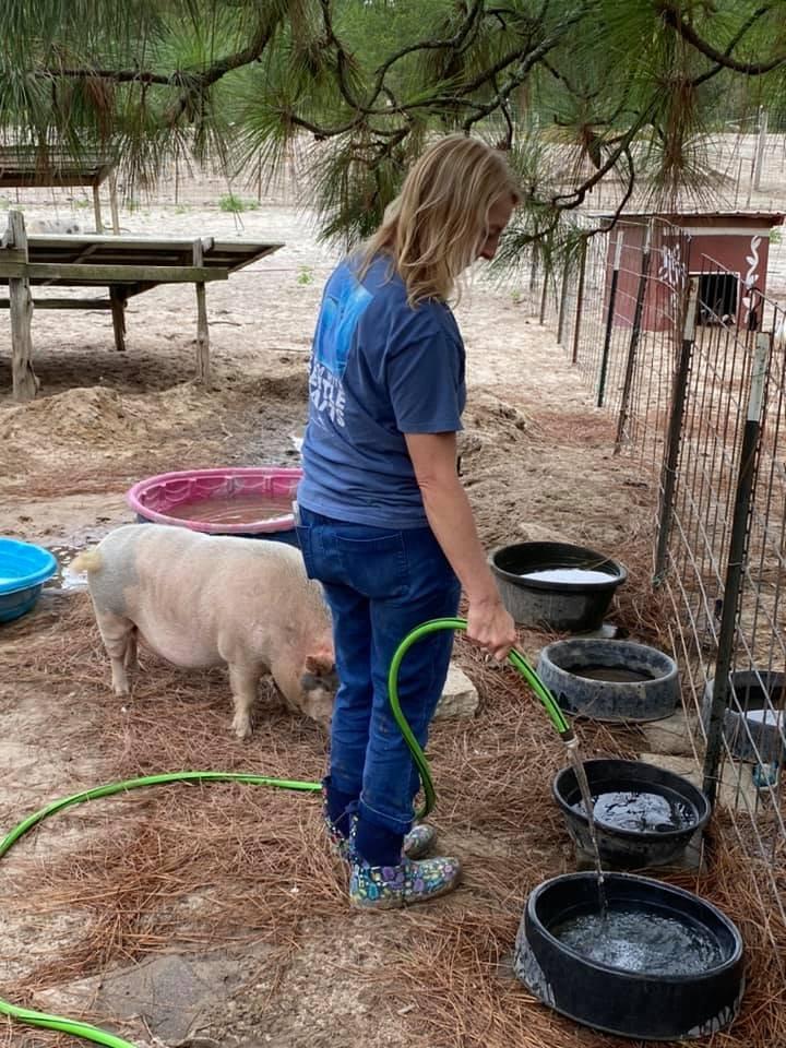 Cotton Branch Farm: 328 Lightwood Knot Rd, Leesville, SC