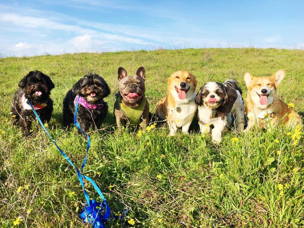 Fit Dog Theory: Walnut Creek, CA