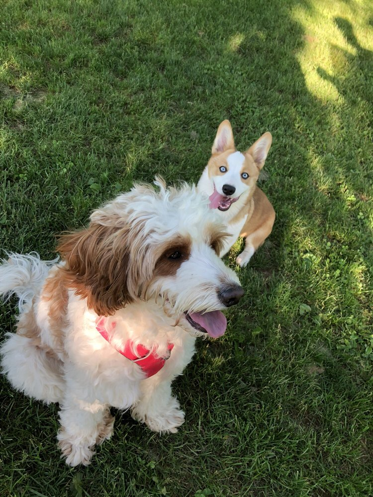 Colonial Park Dog Park: 156 Mettlers Rd, Somerset, NJ
