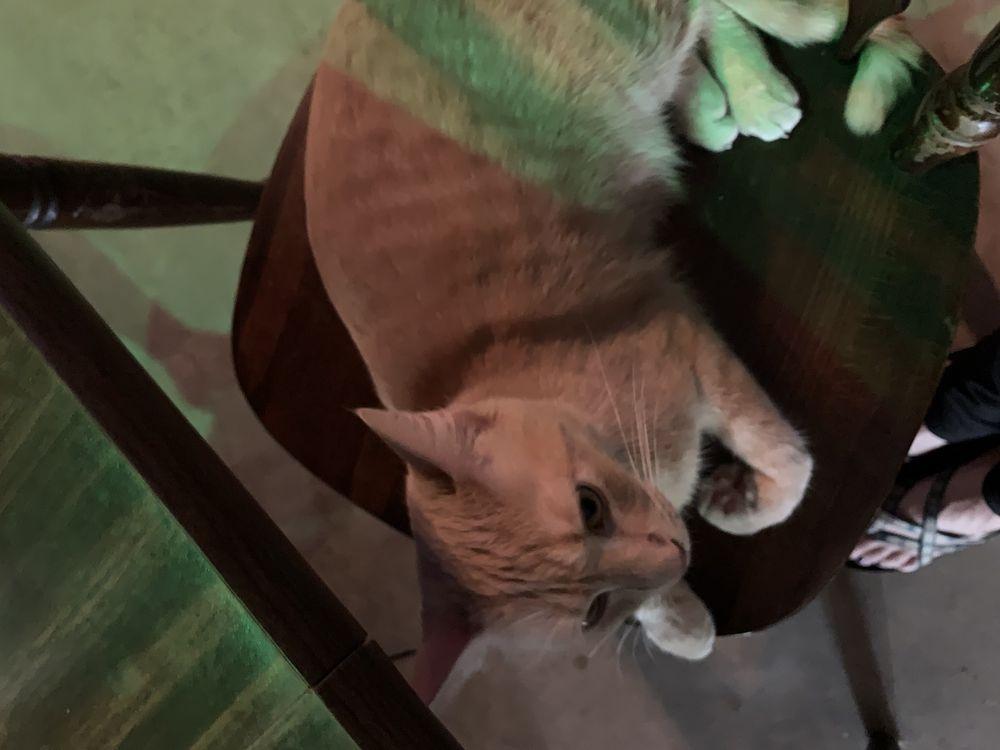 Organic Cat Café & Listening Lounge: 928 S Main St, Greenville, SC
