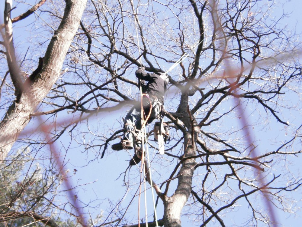 Forest Keepers Tree Care: Lawrence, KS