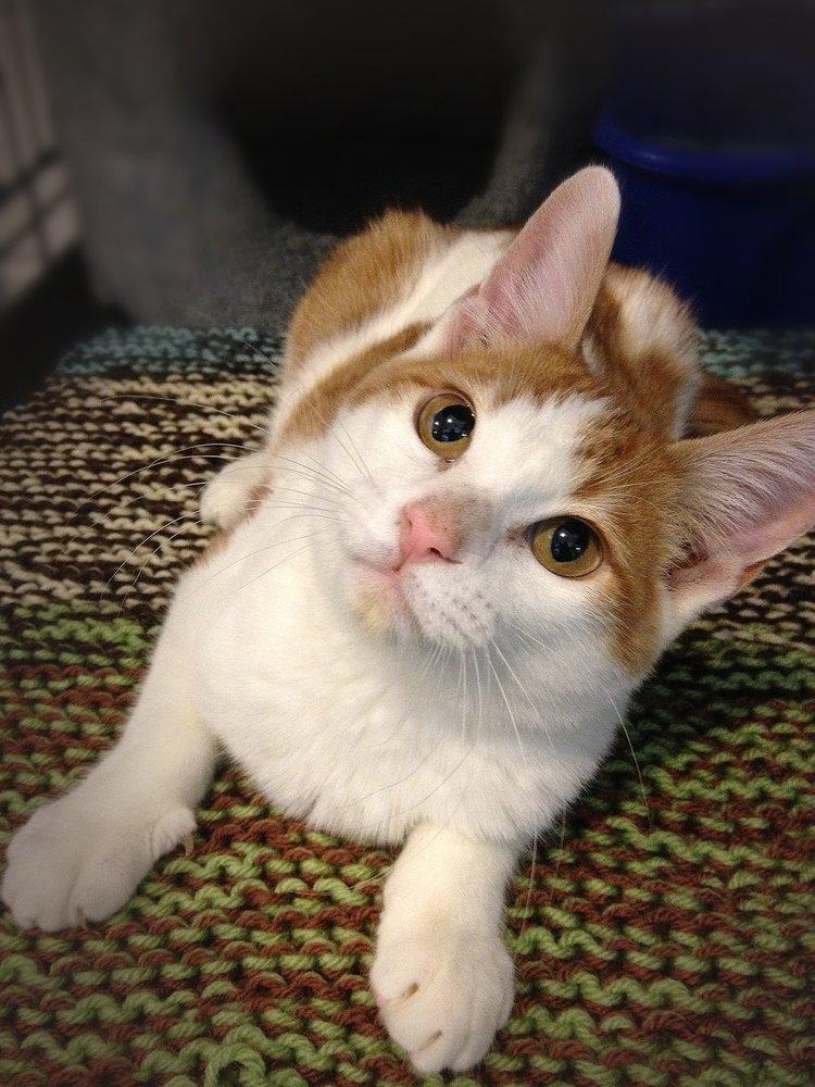 Bonner Animal Rescue: 104 Forest St, Bonner Springs, KS