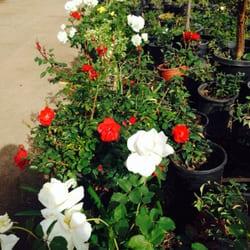 Superior Photo Of Gardena Nursery #2   Gardena, CA, United States