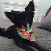 Photo of The Pooch Patio - Dallas TX United States. Happy Pup  & The Pooch Patio - 58 Photos u0026 96 Reviews - Pet Stores - 2515 Manor ...