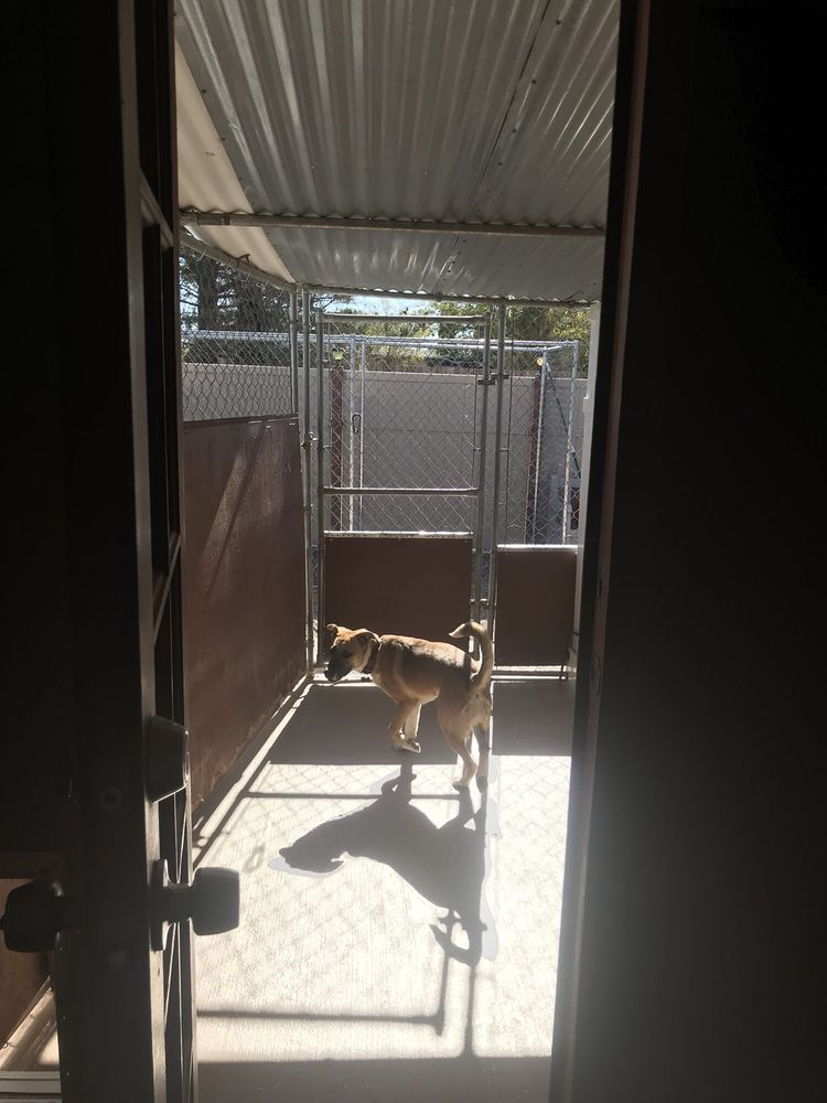 Alex's Doggy Daycare Suites: 26199 US Hwy 58, Barstow, CA