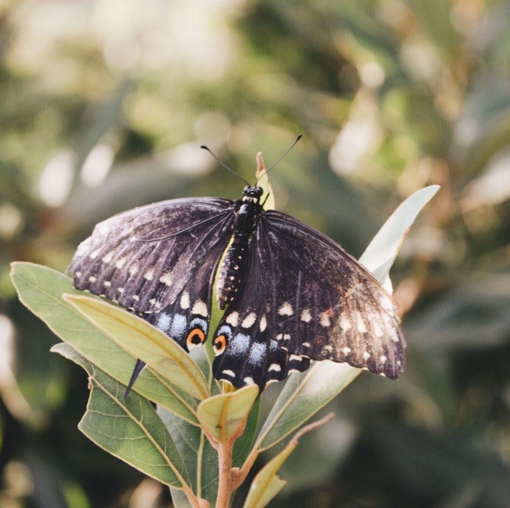 Social Spots from Norfolk Botanical Garden