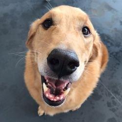dog daycare bellevue wa