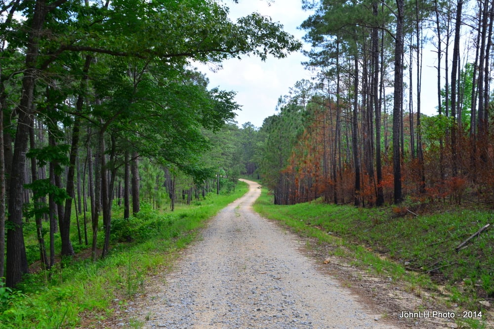 Homochitto National Forest - Clear Springs Recreation Area: Roxie, MS
