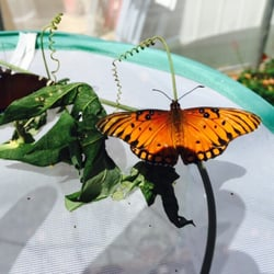 Photo Of Butterfly Farms   Encinitas, CA, United States