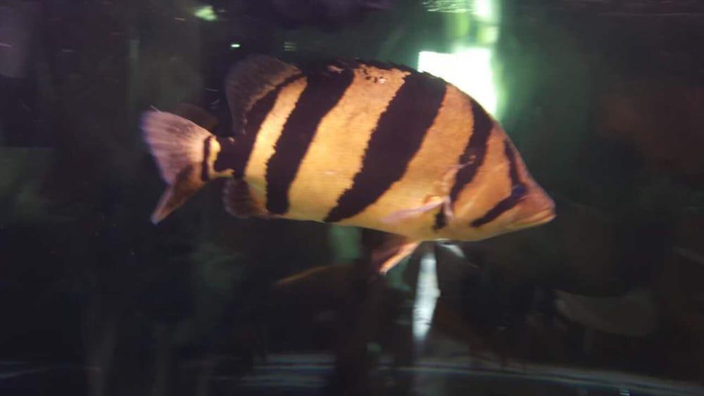 Monster Aquarium: 131-08 40th Rd, Flushing, NY