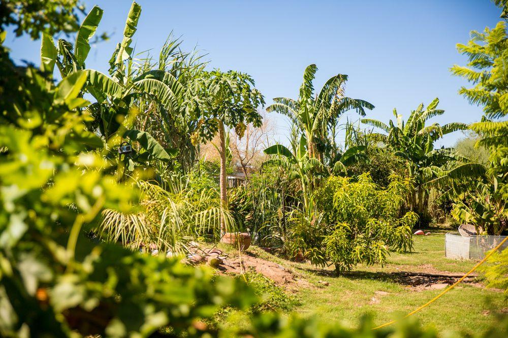 A Tropical Concept Nursery
