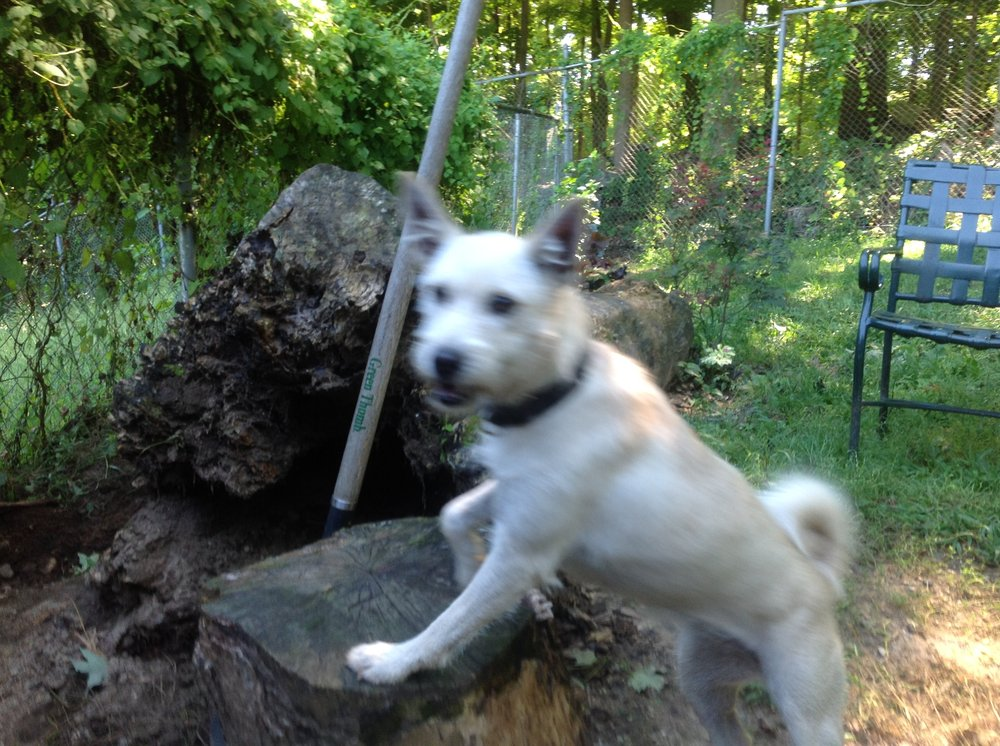 Northwind Kennels: 402 Old Post Rd, Bedford, NY