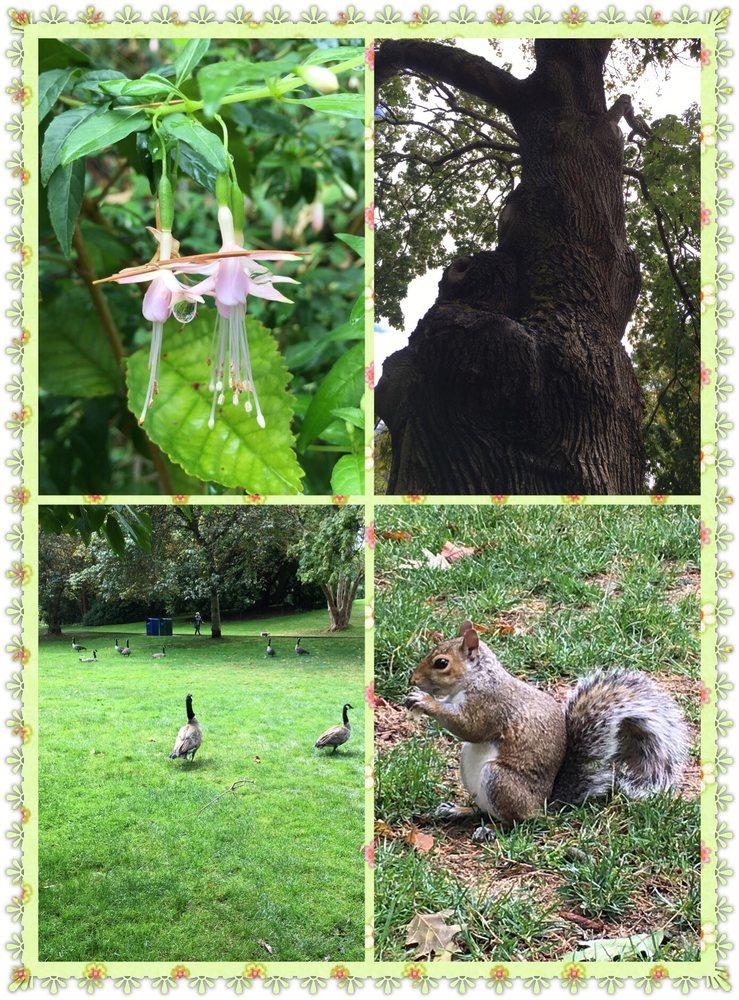 Carl S English Jr Botanical Garden 55 Fotos Jardins Bot Nicos 3015 Nw 54th St Sunset Hill