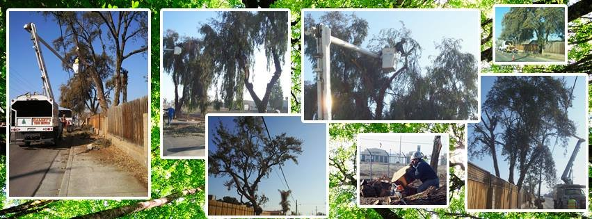 Halsey's Tree Service: Visalia, CA