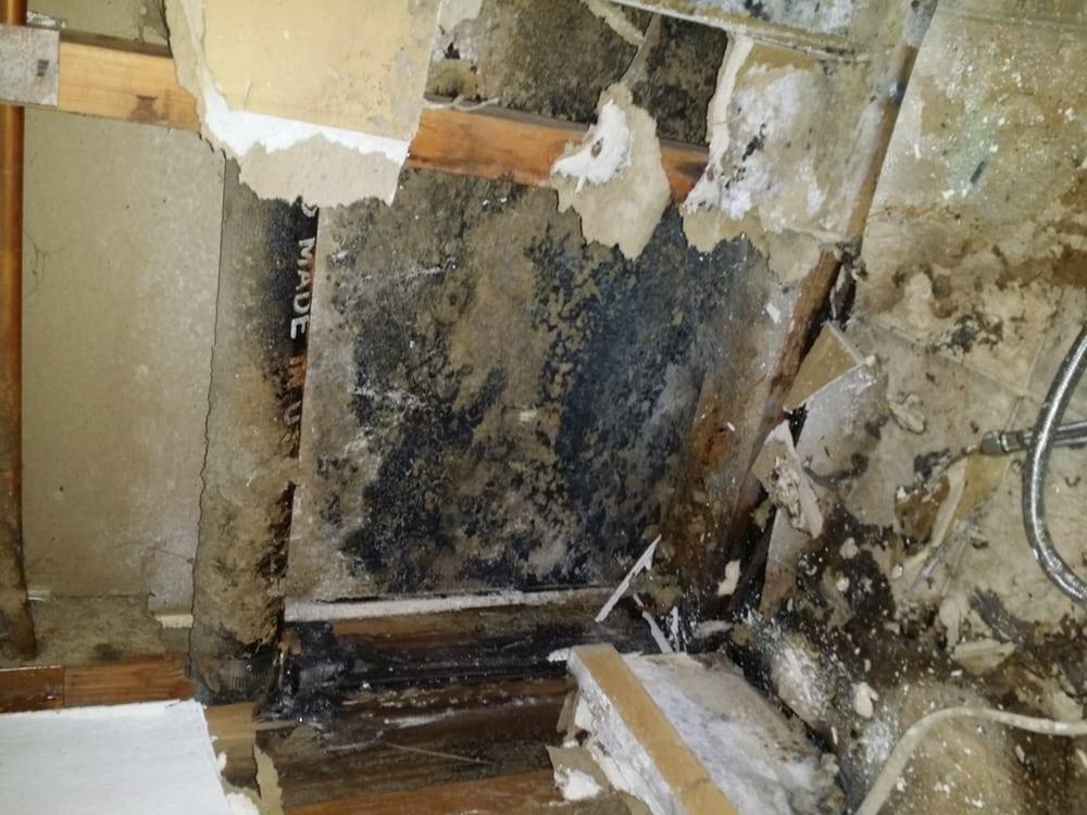 black mold behind the dishwasher yelp. Black Bedroom Furniture Sets. Home Design Ideas