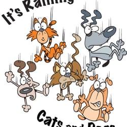 Raining Cats And Dogs Stockton Ca
