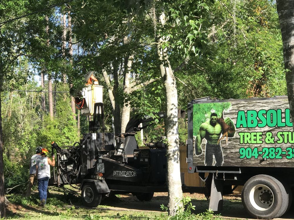 Absolute Tree and Stump: 2287 Dark Bay Dr, Middleburg, FL