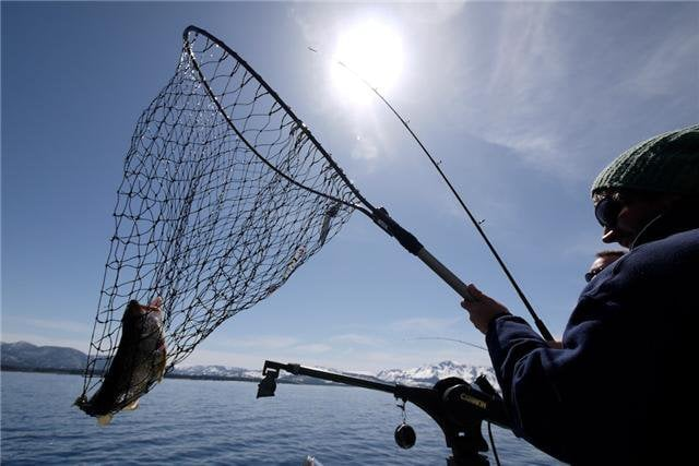 Bringing the fish in yelp for Tahoe sport fishing