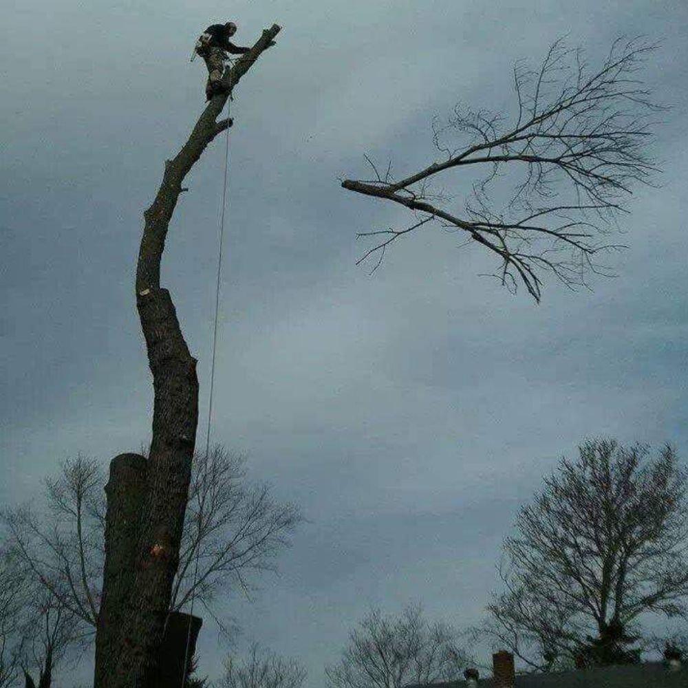 Fischer Landscape an Tree Service: Cincinnati, OH
