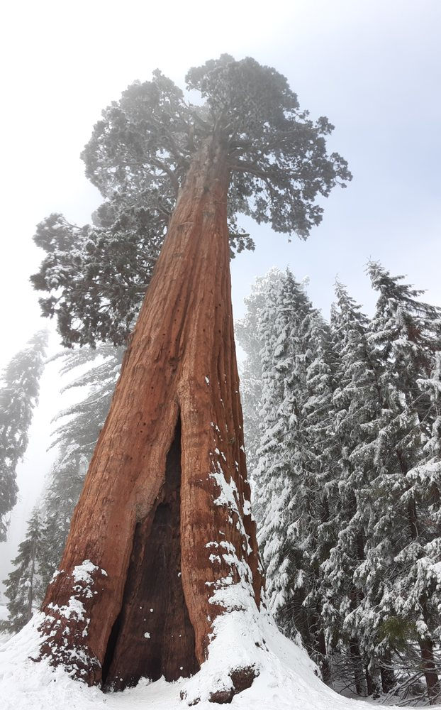 Sequoia Guides: Three Rivers, CA