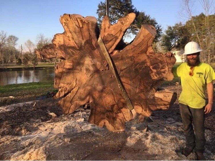 Arbor Tech Tree Service: 8732 Quarters Lake Rd, Baton Rouge, LA
