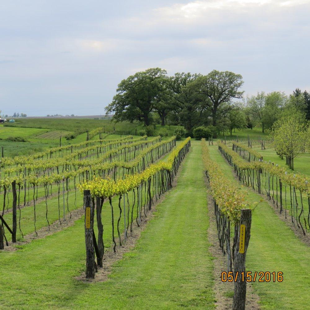 Backyard Vine & Wine: 30484 Icon Rd, Maryville, MO