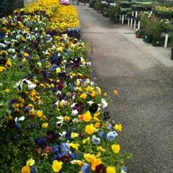 Source · Photo Of Houston Garden Center   Katy, TX, United States. Flowers