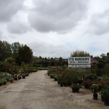 Photo Of Ito Nursery Inc San Juan Capistrano Ca United States Follow