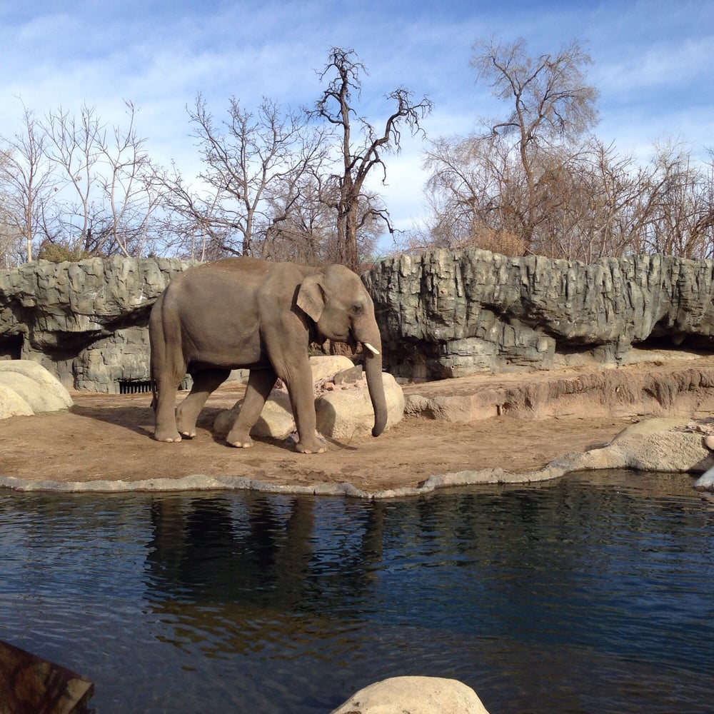 Denver Zoo: This Is My First Visit To This Zoo. My 3-year Old Nephew