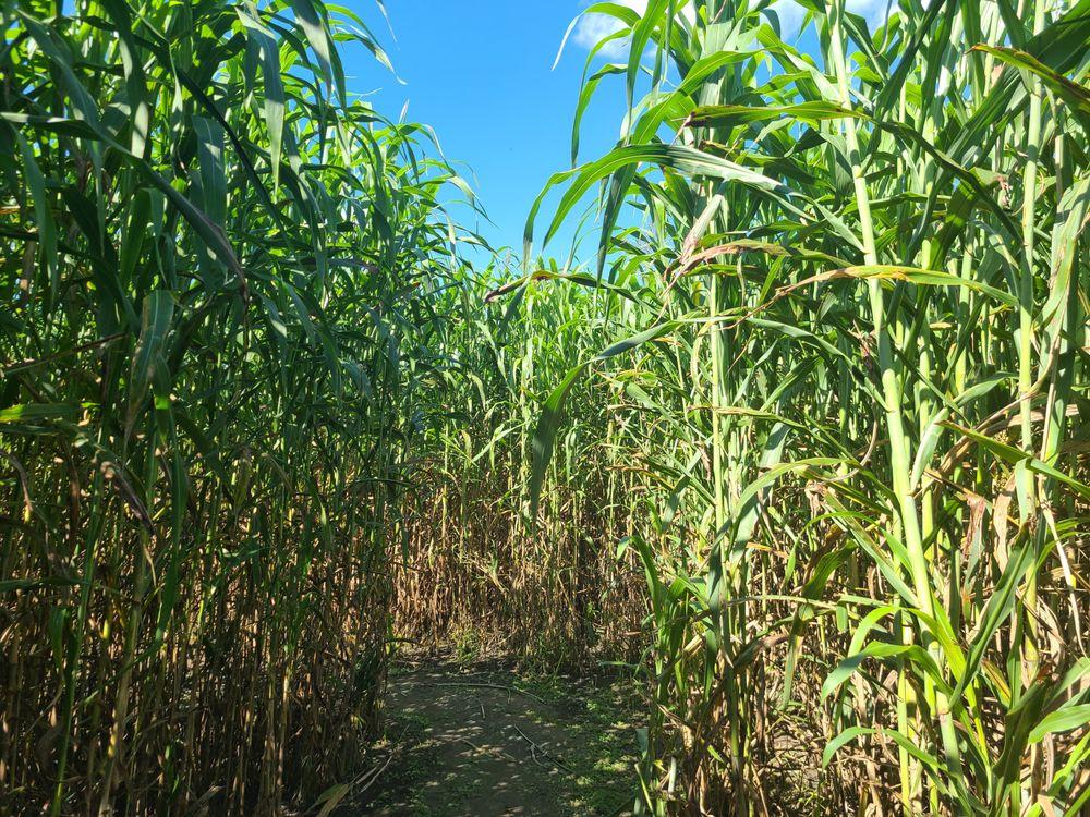Maze Craze: 372 Artesia Rd, Hallsboro, NC