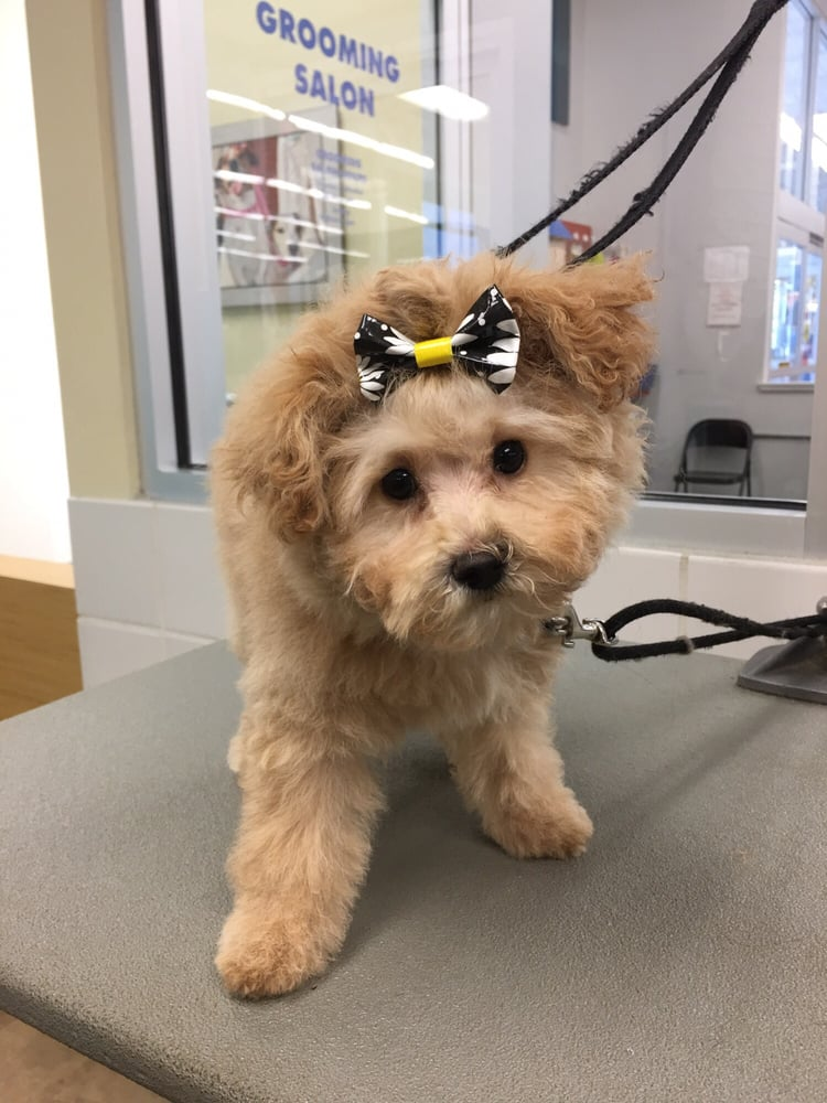 How Much Is Dog Grooming At Petco