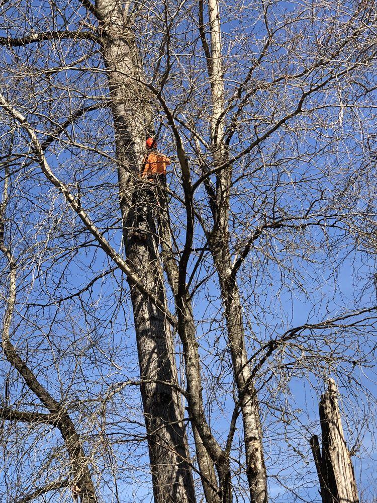 JT Tree Service: Tacoma, WA