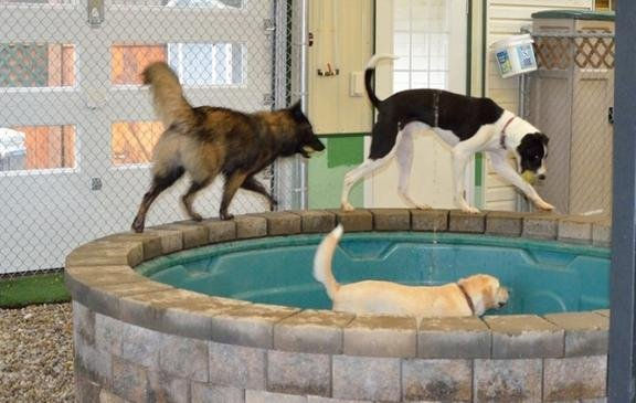 Canine Corner And Cats Too: 1201 8th St NW, Cedar Rapids, IA