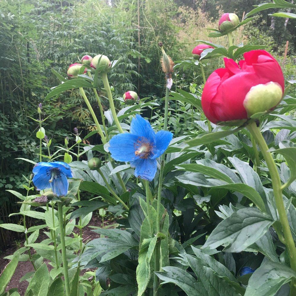 photo of alaska botanical garden anchorage ak united states - Alaska Botanical Garden