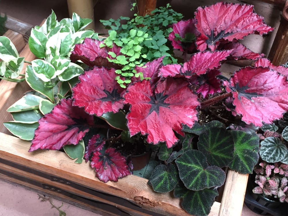 Wide Variety Of Indoor Plants Yelp