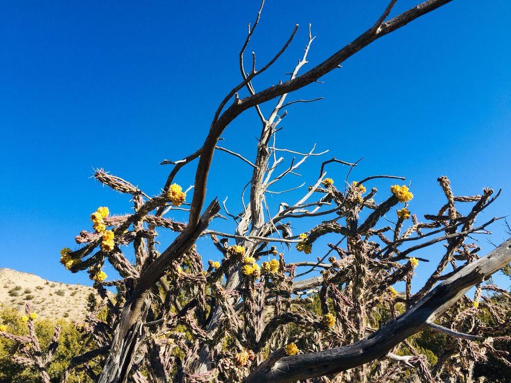 Kasha-Katuwe Tent Rocks National Monument: Indn Service Rt 92, Cochiti, NM