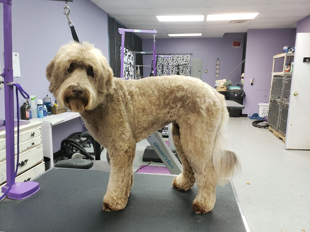 K9 Couture Pet Grooming: 305 W State St, Kennett Square, PA