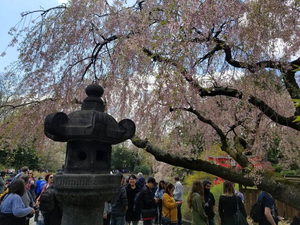 Japanese Hill-and-Pond Garden: 1000 Washington Ave, Brooklyn, NY