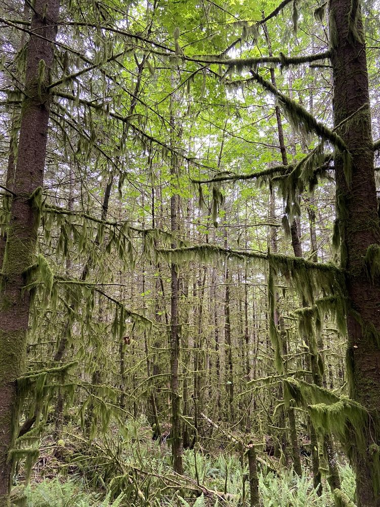 McDonald Dunn Research Forest: 8692 NW Peavy Arboretum Rd, Corvallis, OR