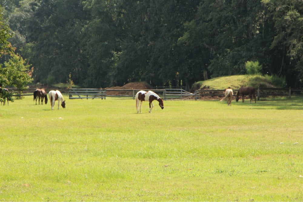 Dixie Stables and Riding Academy: 504 Dunlevie Rd, Allenhurst, GA