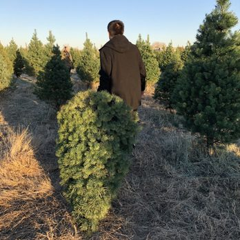 Photo of 4 C Choose & Cut Christmas Tree Farm - Wichita, KS, United - 4 C Choose & Cut Christmas Tree Farm - Christmas Trees - 11229 E
