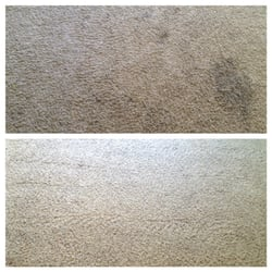 photo of purelements carpet cleaning specialists highland utah ut united states before