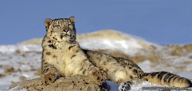 Animals of Montana: 170 Nixon Peak Rd, Bozeman, MT