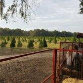Santas Christmas Trees Forest - 32 Photos & 21 Reviews - Christmas ...