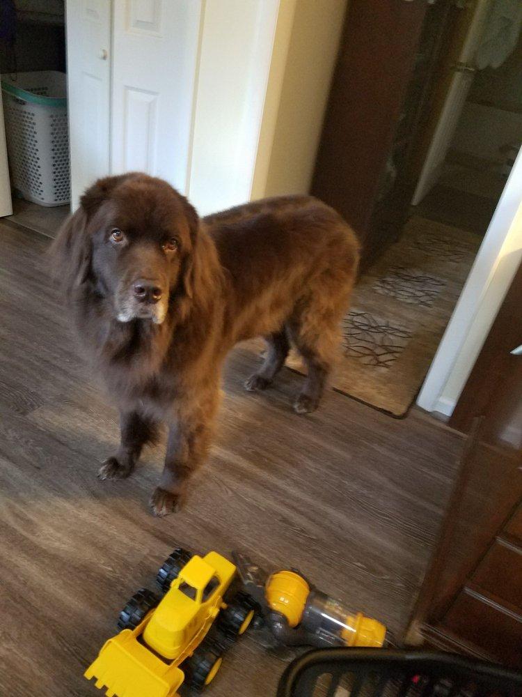 Dog Grooming Virginia Beach