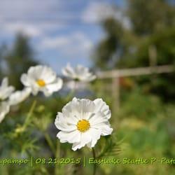 Eastlake P-Patch Community Gardens - 2900 Fairview Ave E, Eastlake