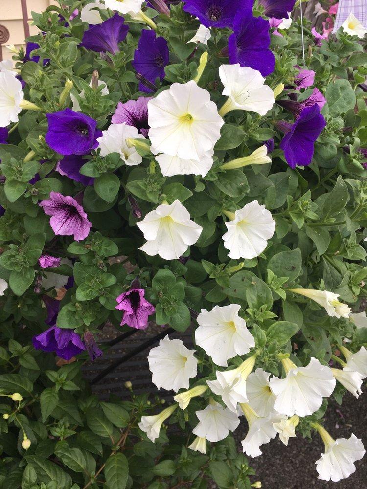The Flower Shoppe: 309 Ridge Rd, Newton Falls, OH