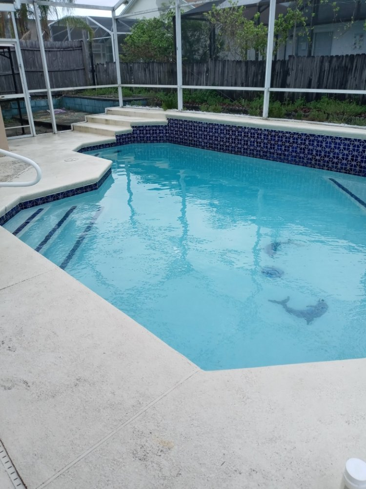 TMR Pool Cleaning Services: Davenport, FL