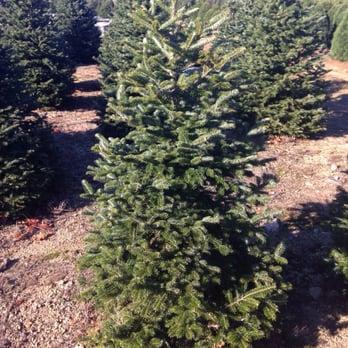 Photo of Henry's Christmas Tree Farm - Hope, RI, United States - Henry's Christmas Tree Farm - Temp. CLOSED - 30 Photos & 18 Reviews