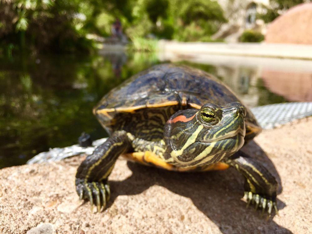 The Turtle Pond - 18 Photos - Parks - 2300-2328 University